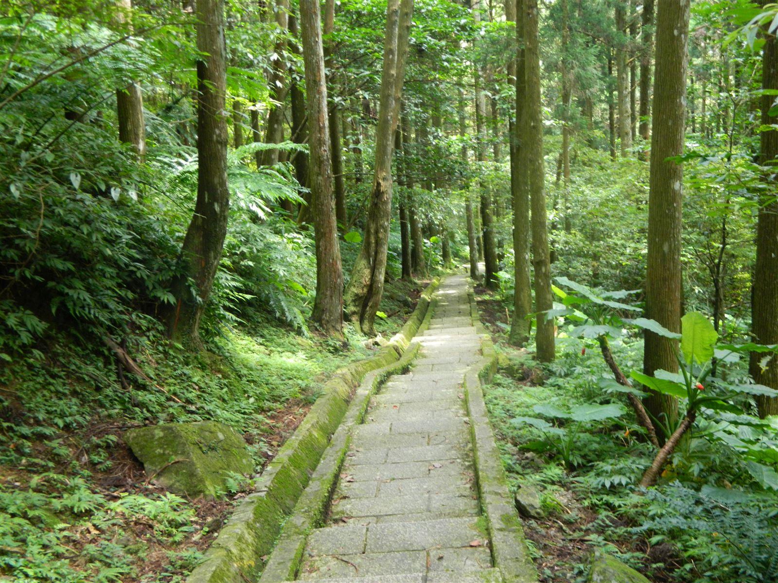 林務局發布「三級延長適度鬆綁,林務局配合開放部分森林育樂場域」